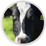 Milk Cow At Point Reyes National Seashore California 5dimg9301912 Round Beach Towel