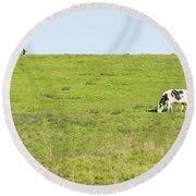 Milk Cow At Point Reyes National Seashore California Dsc4882 Round Beach Towel