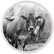 Milk Cow Stowe Vermont In Black And White Round Beach Towel