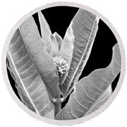 Round Beach Towel featuring the photograph Milkweed Black And White by Christina Rollo