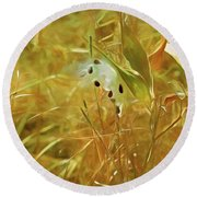 Milkweed In Sunlight 2 Round Beach Towel