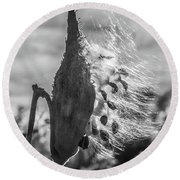 Milkweed Pod Back Lit B And W Round Beach Towel