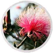 Mimosa In Bloom Round Beach Towel