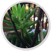 Mini Succulent  Round Beach Towel by Russell Keating