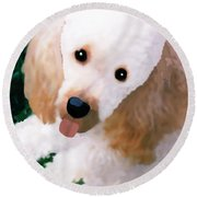 Miniature Poodle Albie Round Beach Towel by Marian Cates