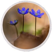 Round Beach Towel featuring the photograph Minimalistic Impresion With Liverworts by Jaroslaw Blaminsky