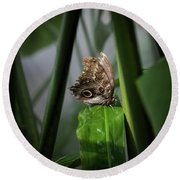 Round Beach Towel featuring the photograph Misty Morning Owl by Karen Wiles