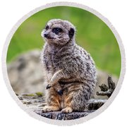 Model Meerkat Round Beach Towel