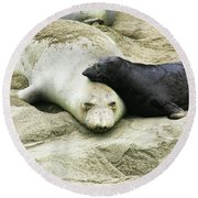 Round Beach Towel featuring the photograph Mom And Pup by Anthony Jones