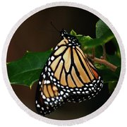 Monarch And Holly Round Beach Towel