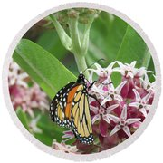 Monarch And Pink Floret - Images From The Garden Round Beach Towel