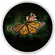 Monarch Butterfly On Lantana Round Beach Towel