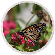 Monarch Butterfly On Fuchsia Round Beach Towel
