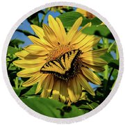 Male Eastern Tiger Swallowtail - Papilio Glaucus And Sunflower Round Beach Towel