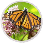 Round Beach Towel featuring the photograph Monarch Butterfly Closeup  by Ricky L Jones
