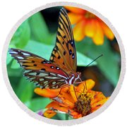 Monarch Butterfly Resting Round Beach Towel