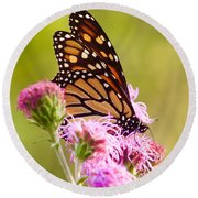 Round Beach Towel featuring the photograph Monarch Butterfly Square by Heidi Hermes