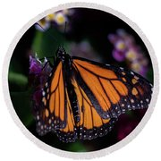 Round Beach Towel featuring the photograph Monarch by Jay Stockhaus