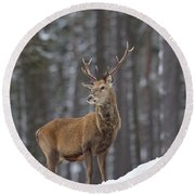 Monarch Of The Woods Round Beach Towel