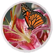 Monarch On A Stargazer Lily Round Beach Towel