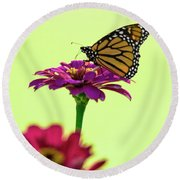 Monarch On A Zinnia Round Beach Towel by Shelly Gunderson