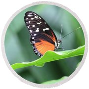 Monarch On Green Leaf Round Beach Towel