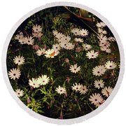 Round Beach Towel featuring the photograph Monarchs And Daisies by Cassandra Buckley