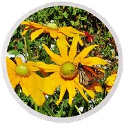 Round Beach Towel featuring the photograph Monarh Butterfly On Yellow Flower by Jasna Gopic