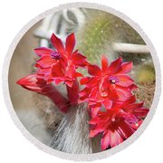 Monkey's Tail Cactus Flower Round Beach Towel