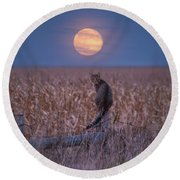 Moon Kitty  Round Beach Towel