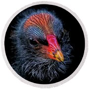 Moorhen Chick Round Beach Towel