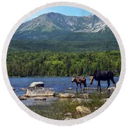 Moose Baxter State Park Maine 2 Round Beach Towel