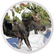 Moose In Snow Round Beach Towel