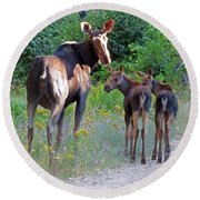 Moose Mom And Babies Round Beach Towel