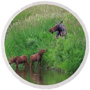 Moose Play Round Beach Towel