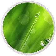 Morning Dewdrops Iv Round Beach Towel