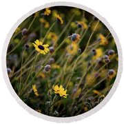 Round Beach Towel featuring the photograph Morning Flowers by Kelly Wade