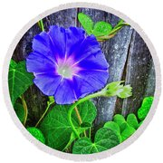 Morning Glory Fresco Hdr Round Beach Towel by Tony Grider