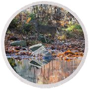 Morning In The Woods Round Beach Towel