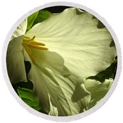 Morning Light - Trillium Round Beach Towel by Angie Rea