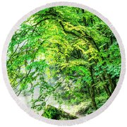 Morning Light In The Forest Round Beach Towel