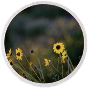 Round Beach Towel featuring the photograph Morning Light by Kelly Wade
