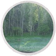 Morning Light On The Elbe River Round Beach Towel