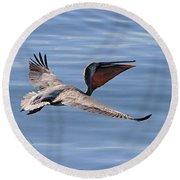 Morning Pelican Round Beach Towel