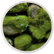 Round Beach Towel featuring the photograph Moss And Ivy by Mike Eingle