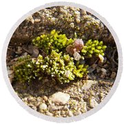 Moss And Pebbles Round Beach Towel