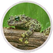 Round Beach Towel featuring the photograph Mossy Frog by Nikolyn McDonald