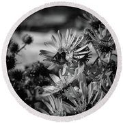 Moth And Flowers Round Beach Towel