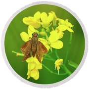 Moth On Mustard Flower Round Beach Towel