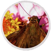 Moth On Pink And Yellow Flowers Round Beach Towel